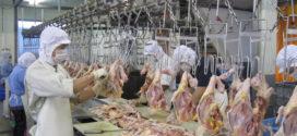 Tuyển 10 nữ làm thịt gà tại nhà máy Thái sư Phụ Cao Hùng