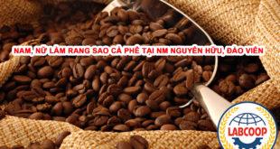 Tuyển nam nữ làm rang sao cà phê tại nhà máy Nguyên Hữu