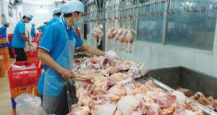 Tuyển 02 nam 02 nữ làm thịt gà đông lạnh tại NM Diệu thăng, Đài Trung