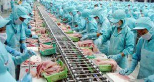 Tuyển 02 nam làm thực phẩm đông lạnh tại NM Tam Kim